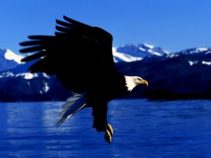 Eagle Ajaytao
